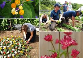 Homebase Garden Gardens U2013 Working Plot