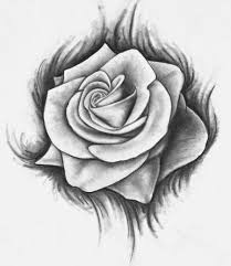 perfect drawings of a rose 61 for your home decor photos with