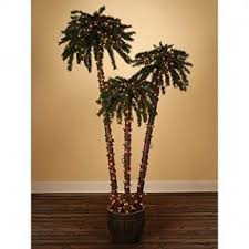 outdoor palm tree l foter