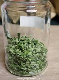 how to cut and dry oregano getty stewart