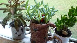succulents meaning file three succulents jpg wikipedia
