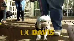 uc davis students get visit from therapy dogs to help de stress