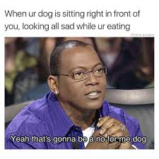 Sitting Meme - when ur dog is sitting right in front of you looking all sad while