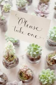 best bridal shower favors succulent wedding favors best photos wedding ideas
