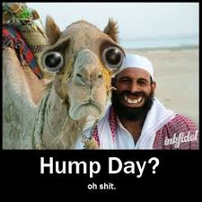 Hump Day Camel Meme - hump day camel meme images also mod