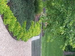 common landscape design mistakes softening edges designing