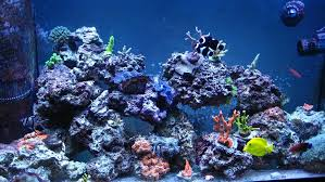 Live Rock Aquascaping Ideas Best Way To Build Exsisting Established Live Rock Structures