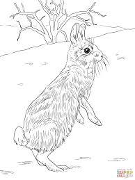 cottontail jackrabbit standing coloring page free printable
