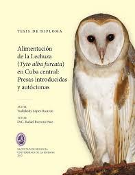 cuban owls eat big anoles u2013 new research by yudisleidy lópez