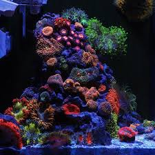 Aquascape Reef 173 Best Reef Aquariums Images On Pinterest Reef Aquarium