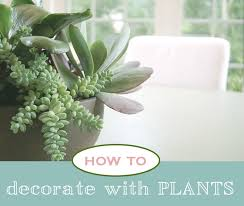how to decorate with plants houseplants house plants