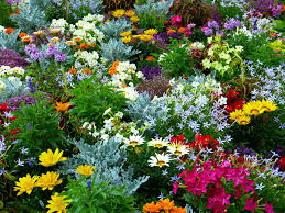 star nursery blog how to have a flower garden with less work