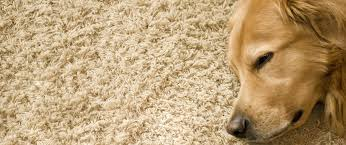 Upholstery Cleaning Indianapolis Best Pet Odor And Stain Removal Cleaning Indianapolis Indy Carpet