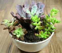 succulent or cactus planter bowl comes with all suplies just