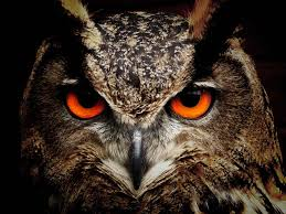 symbolism of a tree owl dream meaning and symbolism