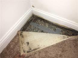 basement waterproofing in st louis springfield st charles