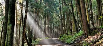 Pennsylvania Forest images Cook forest old forest new adventure visiting the pa great jpg