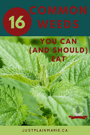 edible weeds that you can find and harvest anywhere