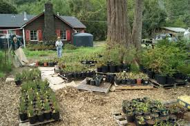 native plant nurseries native plant nursery internship turtle island restoration network