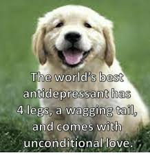 Antidepressant Meme - the world s best antidepressant has 4 legs a wagging tail and