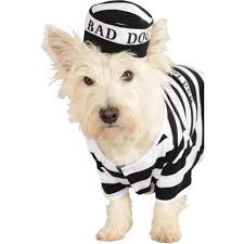 party city halloween costumes for dogs prisoner dog pet costume buycostumes com