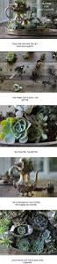 232 best succulents and cacti images on pinterest plants