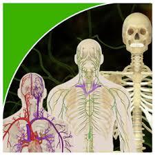 Google Human Anatomy Biology U0026 Human Anatomy Android Apps On Google Play