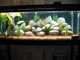 How To Clean Fish Tank Decorations How To Decorate Your Boring Fish Tank Fish Tank Decoration Ideas