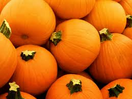pumpkins set to be wasted this halloween