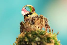 Cute Spiders Phil Ebersole S - spiders with raindrop crowns phil ebersole s blog