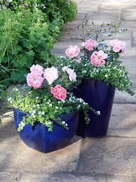 Patio Container Garden Ideas How To Grow Patio Roses In Containers Hgtv