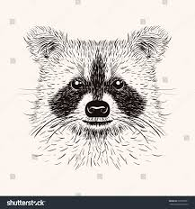 sketch raccoon face hand drawn vector stock vector 268750301
