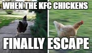 Chicken Running Meme - running chicken imgflip