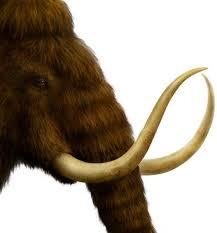 50 images prehistoric animals