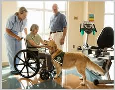Comfort Dogs Certification Golden Retriever Therapy Dogs Best Breed In Therapy Dog Program