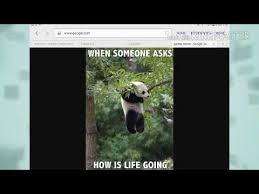 Funny Panda Memes - funny panda memes youtube