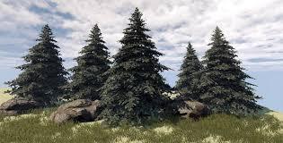 healing power of trees spiritual and healing properties of trees