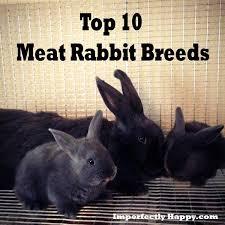 Rabbit Hutch For 4 Rabbits Https I Pinimg Com 736x 23 Ee 85 23ee85aea5df438