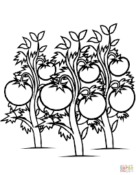 growing grape vine coloring page search results global news