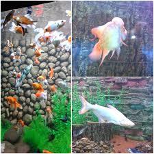 place review aquarium surat water life poise passion