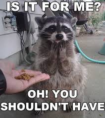 Funny Raccoon Meme - is it for me raccoons funny images and memes