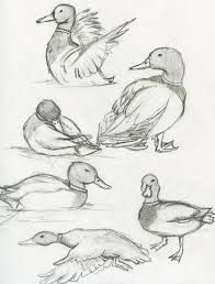 mallard duck the ebestiary tattoo ideas for sam pinterest
