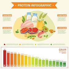 protein diet clip art vector images u0026 illustrations istock