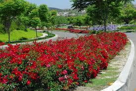 interior design with flowers garden design with beautiful flower landscape hd fileflower carpet