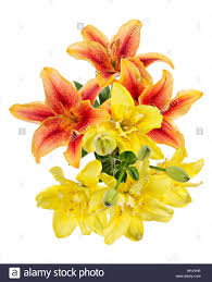 Yellow Lilies Flowers Pattern With Red And Yellow Lilies Isolated On White Stock