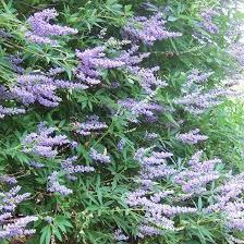 25 unique drought tolerant shrubs ideas on drought