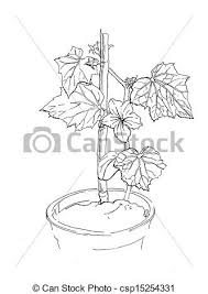 drawings of small cucumber vine with flower in flowerpot ink