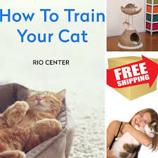 Cat Gyms Cat Playhouse U0026 Ebook How To Train Yor Cat By Rio Center Kitty
