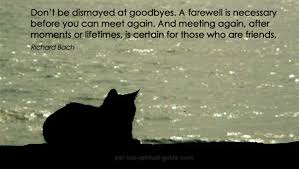 grieving the loss of a pet my animal companion has died pet loss grief care