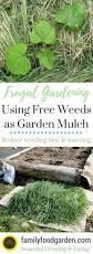 What Is Urban Gardening Best 25 Garden Mulch Ideas On Pinterest Gardening Direct